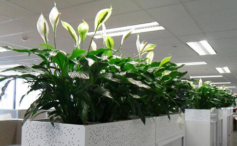 C mo escoger una planta para la oficina for Plantas para oficina