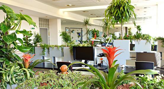 Plantas decorativas para la oficina